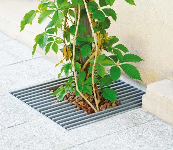 Area - Ranksystem für Pflanzen - Babylone